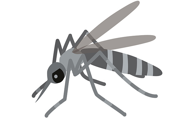 蚊対策・駆除の基本を解説