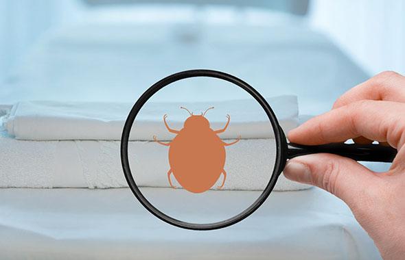 トコジラミ(南京虫)の駆除・対策