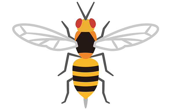 正しい対応をしよう!蜂(ハチ)駆除・対策の基本を解説
