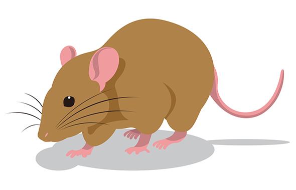 ネズミの基本から駆除・対策までご紹介