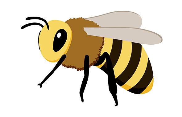 蜂(ハチ)の種類別の特徴