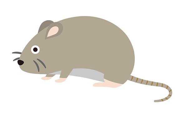 ネズミの種類別の特徴を紹介