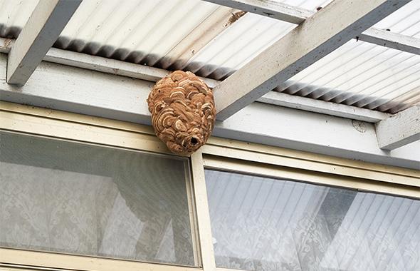 蜂の巣を予防