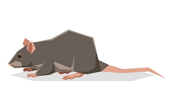 ネズミのフンを見つけたときの対策