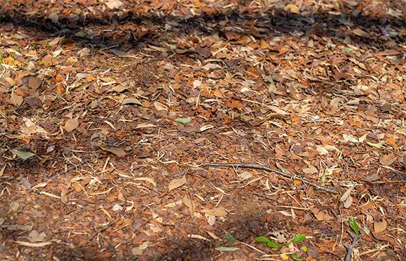 大量 発生 ダンゴムシ