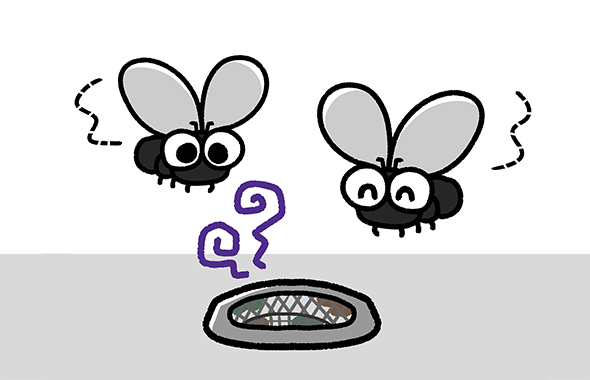 幼虫の駆除方法
